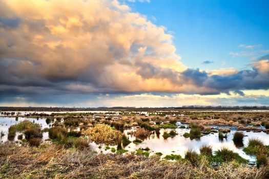 beautiful cloudscape over swamp