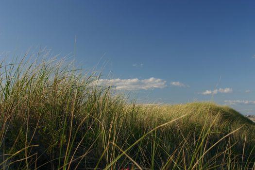 Sea Grass Dunes