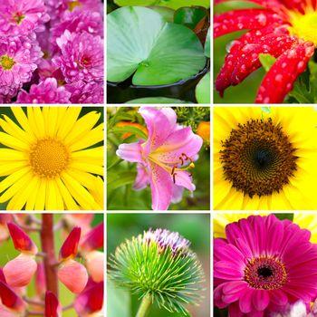 Summer assortment flowers