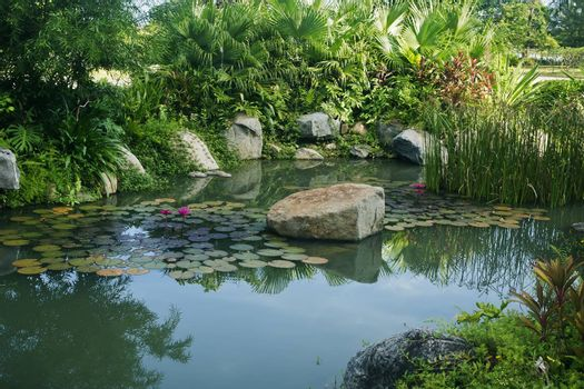 Courtyard pond and water lilies