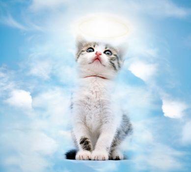 Cat in heaven