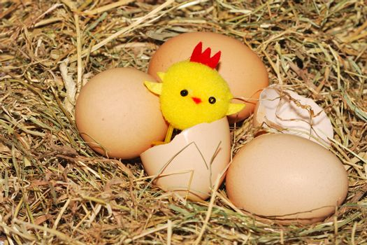 toy chick hatching from egg