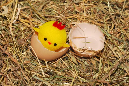 toy chick hatching out