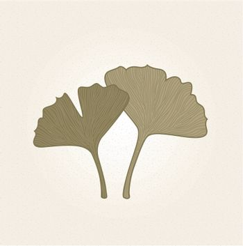 Hand - drawn Gingko herbs on old paper. Vector Illustration