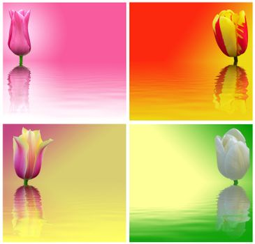 Red, yellow, white and pink tulips on a colored background. Abstract image flowers with reflection on water.