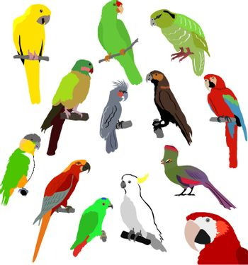 set of the different kinds of parrots