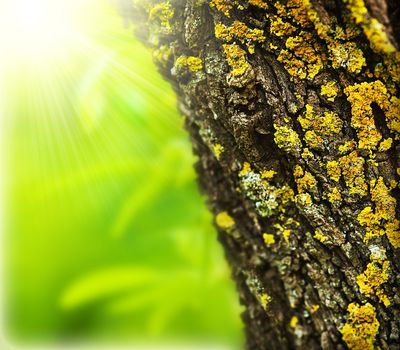 Spring forest abstract background, close up on old tree trunk, sunny springtime day, beautiful nature macro details, fresh green leaves