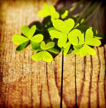 Fresh clover leaves over wooden background