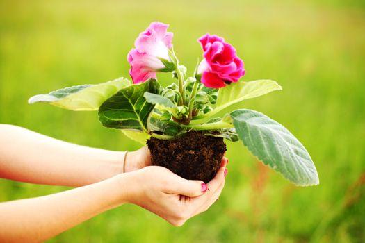 giving flower