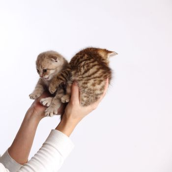 cat in hands isolated on white background