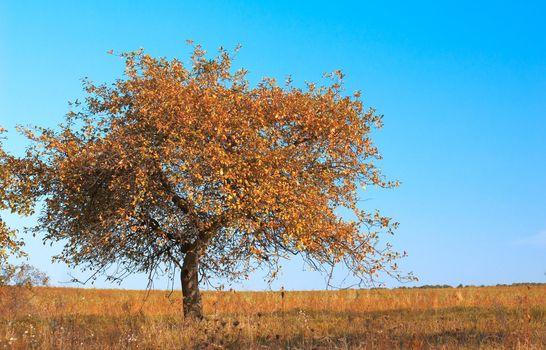 Solitude tree
