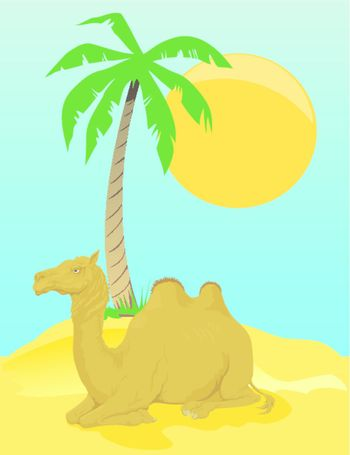 The camel lays in desert under a palm tree. A vector illustration