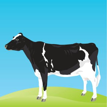 The black-and-white cow costs on a meadow. A vector illustration