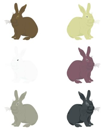 House rabbit of a miscellaneous of colouring. A vector illustration