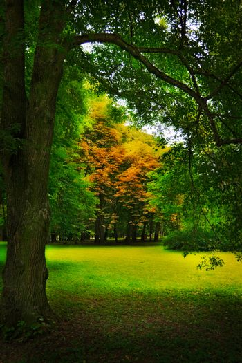 glade in forest