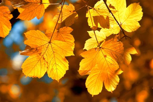 A background of yellow leaves