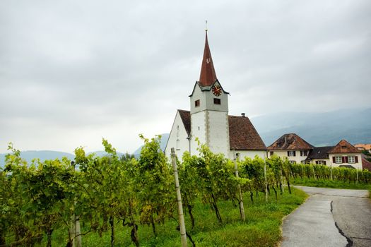 Vine and chapel