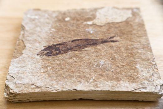 Fossil of Sea Creature