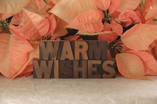 the words Warm Wishes with pink poinsettias in the background