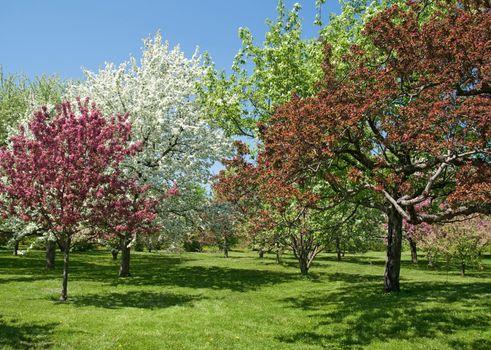 Beautiful spring trees in bloom