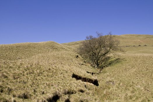 Tree In A Desolate Landscape