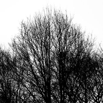 Abstract ancient trees against white background