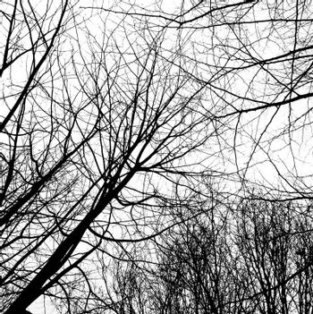 Winter trees without leaves isolated on white