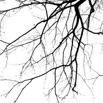 Closeup shot of an ancient tree