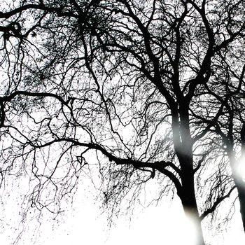 Sun rays coming through winter tree, black and white