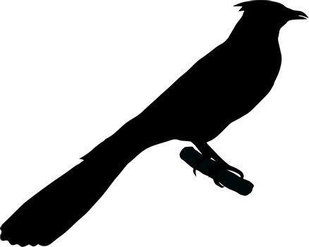 Illustration in style of black silhouette of cuckoo