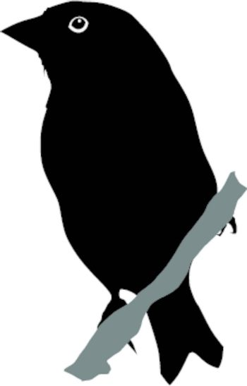 Illustration in style of black silhouette of greenfinch