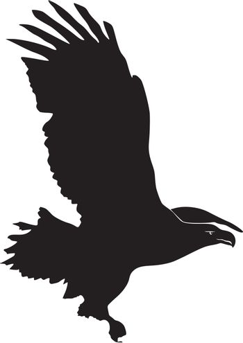 Illustration in style of black silhouette of Sea-Eagle