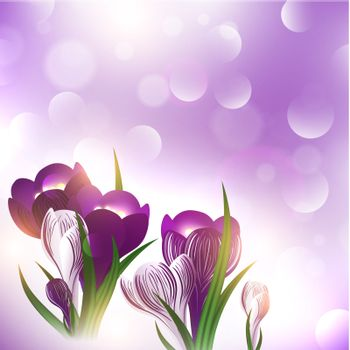 illustration of the crocus flower over bright holiday background