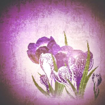 Vintage grunge floral background with wild crocus flower