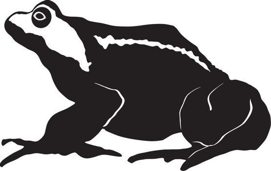 illustration of toad