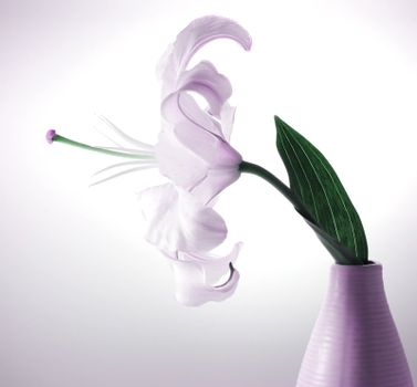 Beautiful violet lily