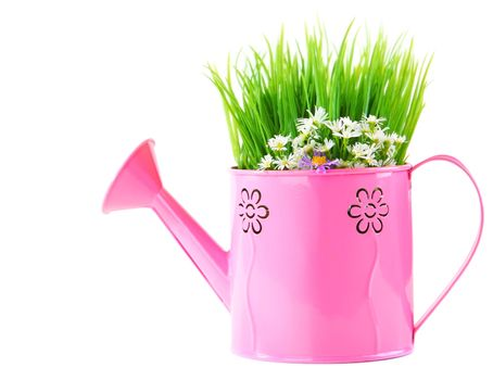 Pink watering can of spring fresh wild flowers isolated on white background
