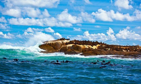 South African seals