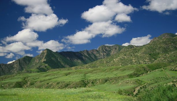 Nature landscape, meadow and mountains, wildlife of Altay
