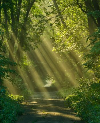 Rays of sunlight between trees in park