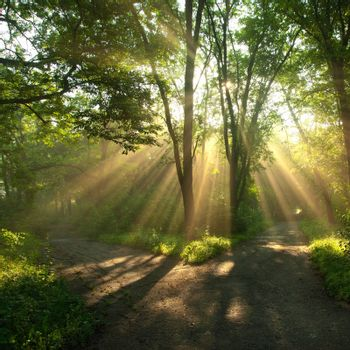 Sun rays shining through branches of trees