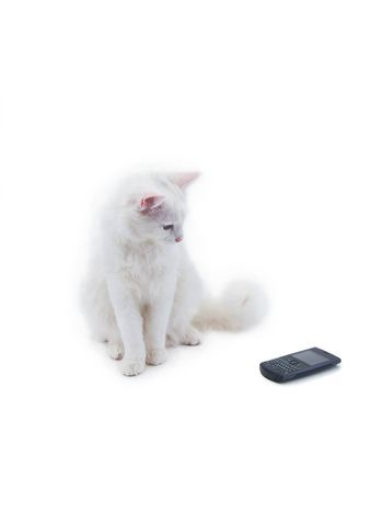 White cat with phone, isolated on white