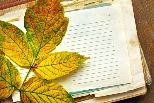 blank sheet of paper with autumn leaf