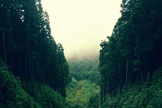 One of the most beautiful places in North America, where often rains and fog covered forest ..