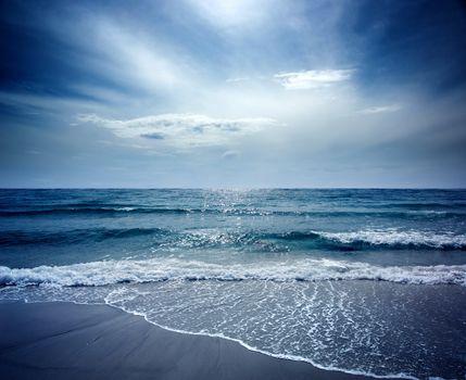 Sealion Seascape