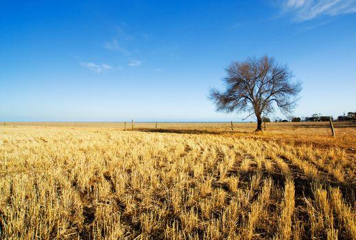 Rural Australian Field