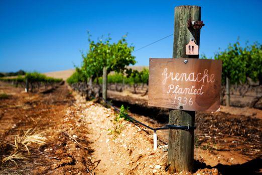 Vintage Barossa Vineyard