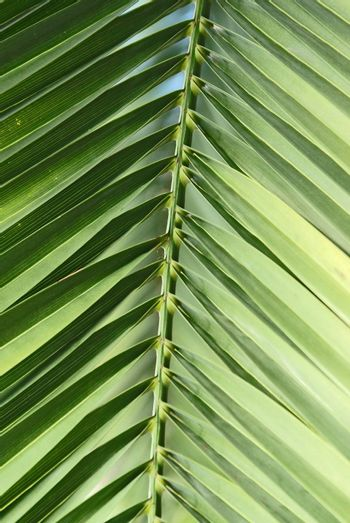 Extreme close up of a green palm leaf