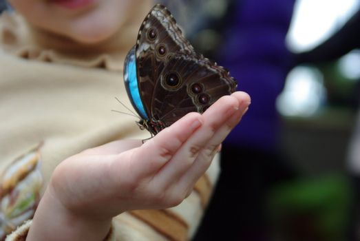 Beautiful colour butterfly on child finger. Insect.