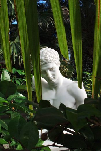 Bust of an antique man in tropical garden